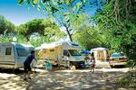Ste Maxime Camping  Côte d'Azur Campings